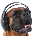 'Dogs Hate Metal' According To Scientific Study