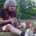 Queen's Brian May: 'I'd Rather Be Remembered For Saving Animals'