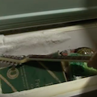 This Guitar Neck Is Supposed to Be 'Indestructible': Here's What Happens When It's Put Into Deep Freezer