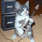 Metal Cats Book Sees Metal Musicians Pose With Their Pets