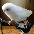 Parrots Prefer Rock and Folk to Dance Music, Says New Study