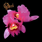 Opeth: Orchid
