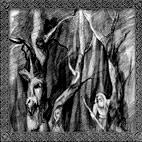 Temnozor': Sorcery Is Strengthening The Black Glory Of Rus'