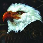 Mogwai: The Hawk Is Howling