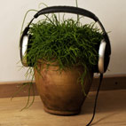 Plants Love Metal According to UK Gardening Expert