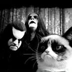 Cat Mosh Pit Is One of the Best Things Happened to Metal