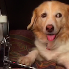 Cuteness Overload: Here's a Drum-Playing Doge to Melt Your Heart